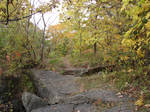 Rocky Forest Background 33