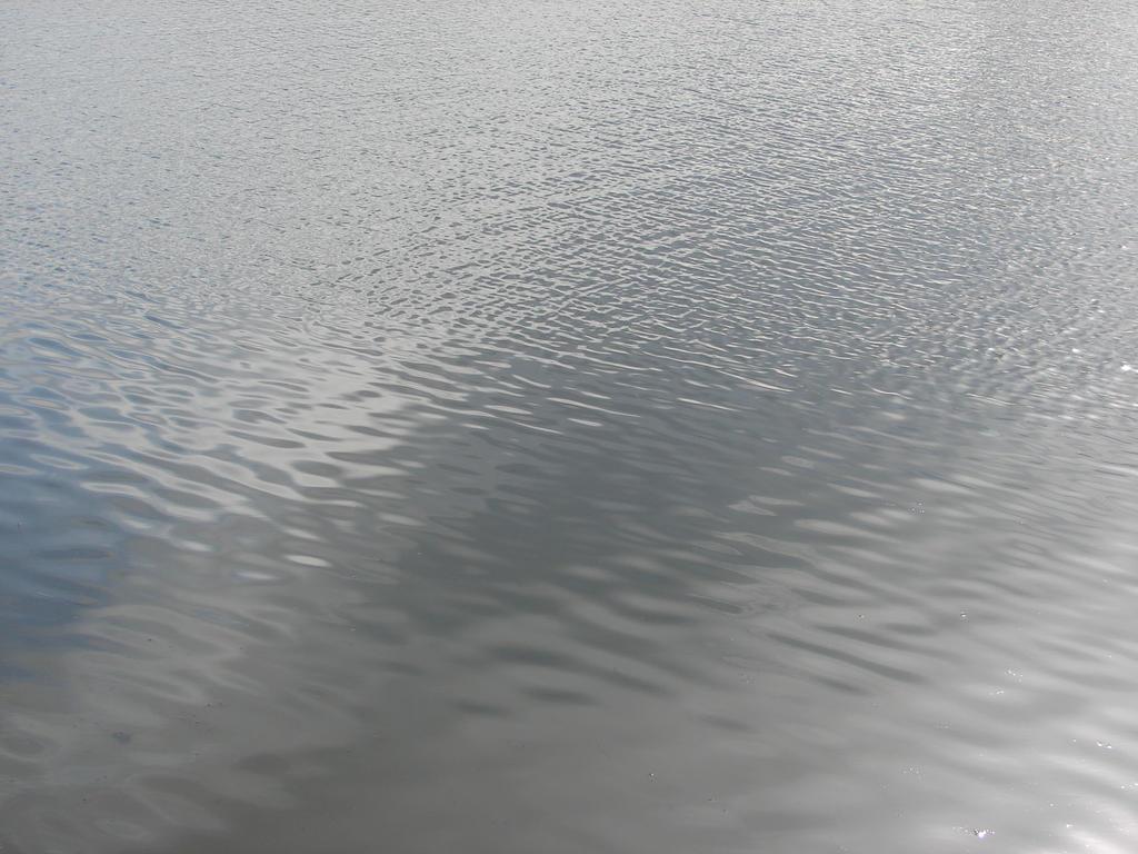 Pond Water Texture