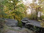 Rocky Forest Background 37
