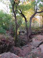 Rocky Forest Background 38 by FantasyStock
