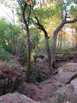 Rocky Forest Background 38