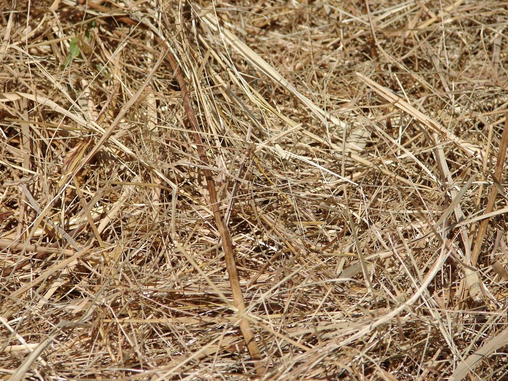 Straw Hay Farm Texture by FantasyStock