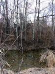Swampy Woodland Stream 1