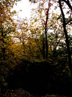 Woodland Trail Landscape 10 by FantasyStock