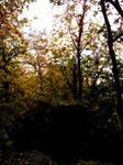 Woodland Trail Landscape 10