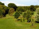 Pastoral Fence Background 5