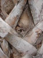 Palm Tree Bark Texture by FantasyStock