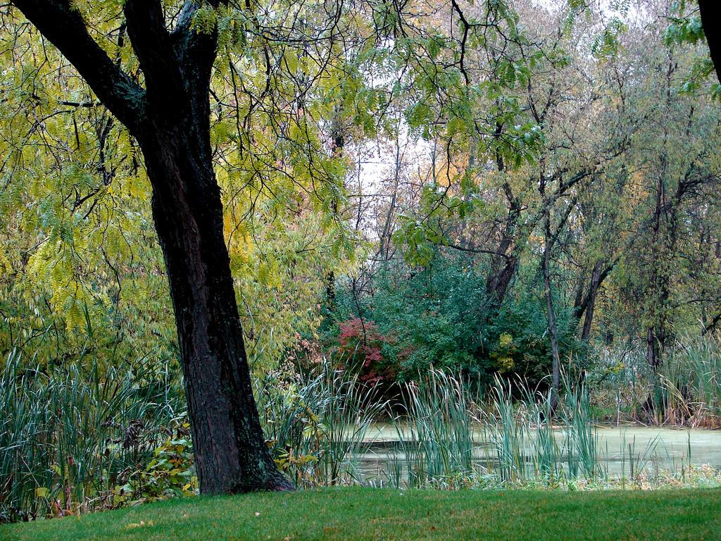 Fall Background Landscape 1