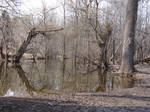 Bare Trees in Pond Water 1