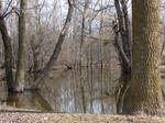 Bare Trees in Pond Water 2