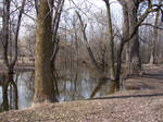 Bare Trees in Pond Water 3