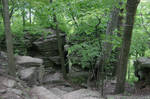 Wooded Rocky Forest Landscape