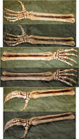 Skeletal Arm Bones + Hand