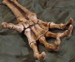 Skeletal Reaching Hand Prop by FantasyStock