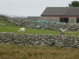 County Galway Stone Walls 5 by FantasyStock