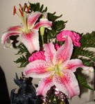 Pink and White Lilies Blooming