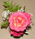 Pink Orange Yellow Roses 1