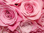 Pink Rose Boquet Close Up