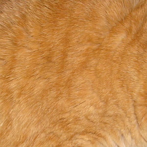 Orange Tabby Cat Fur Texture
