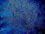 Sugary Tree Background Texture