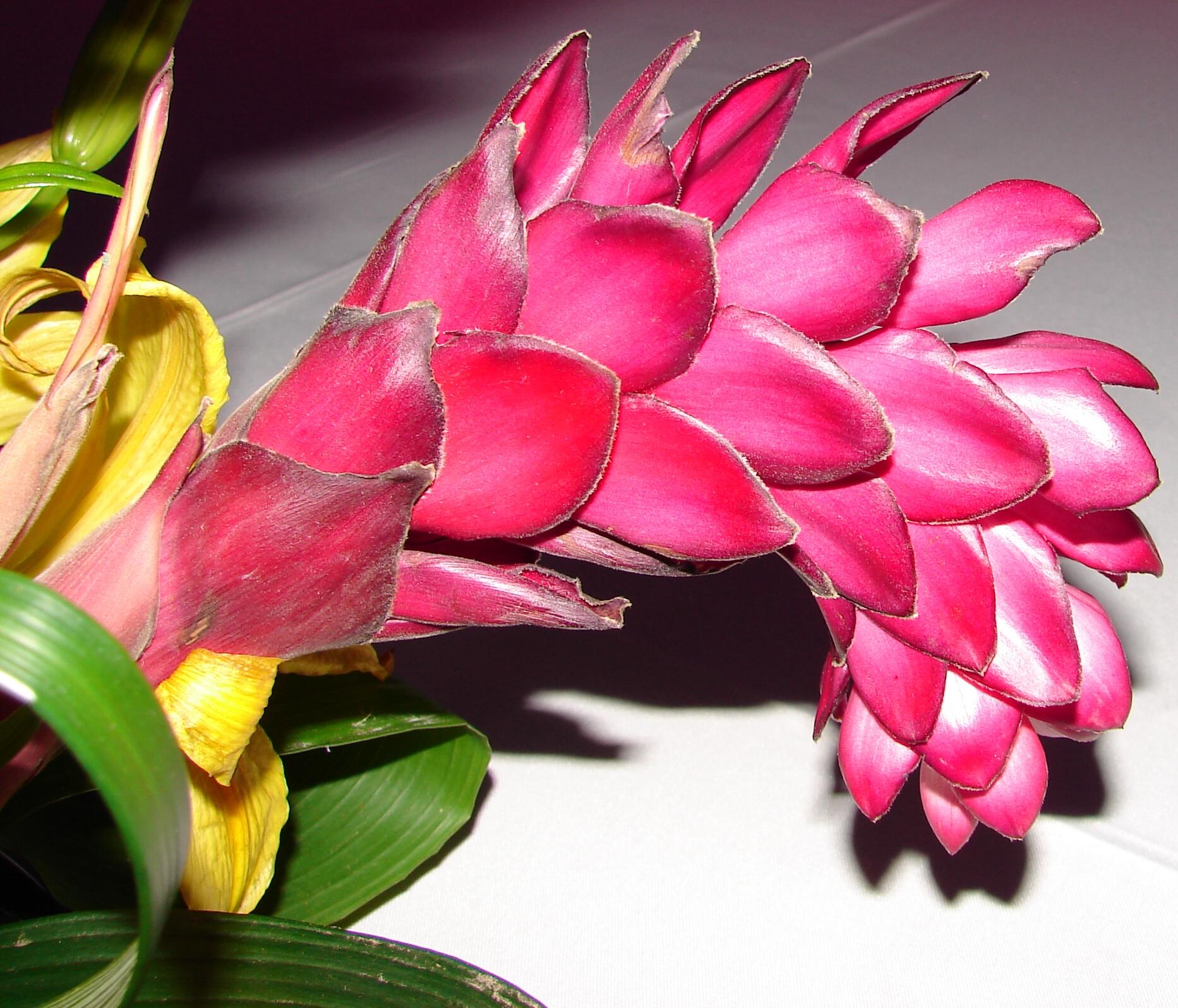 фото экзотических цветов в хорошем качестве звезды скопления
