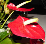 Exotic Red Tropical Flower 2