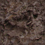 Seamless Wet Mud Texture