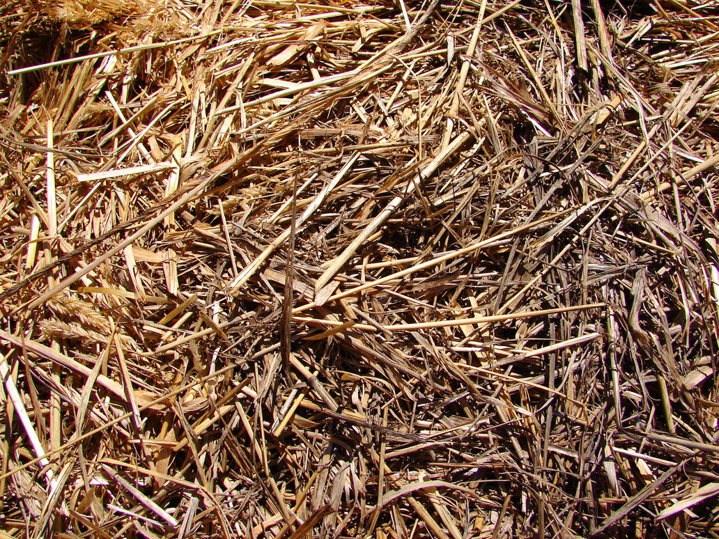 Hay Straw Farm Texture by FantasyStock