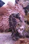 Seahorse + Shrimp Aquarium 3