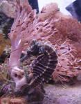 Seahorse + Shrimp Aquarium 4