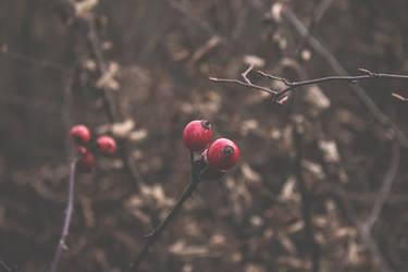 Polish Kashubian Villages December 2015 (2) by eyesofthenorth