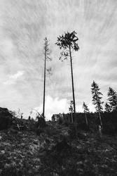 Tatra Mountains -  Path Leading Us Home
