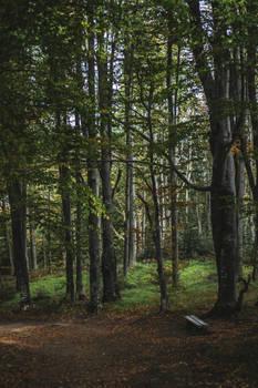 Autumn Trail 6