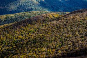 Autumn Trail 8