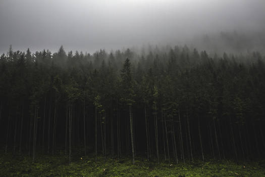 Welcome to a misty forest