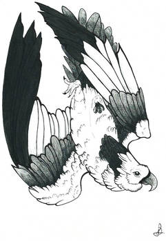 Traditional Eagle