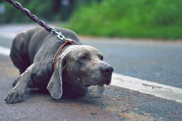 Dog - Vincenne