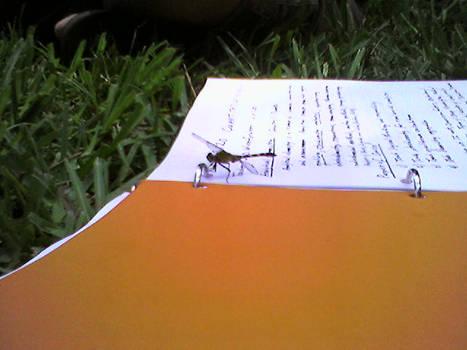 Entomology: Trapperkeeper prey