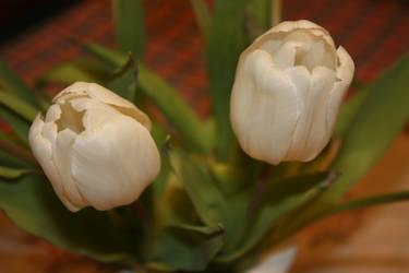 tulips by GLO-HE