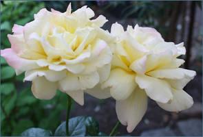 my garden splendor by GLO-HE