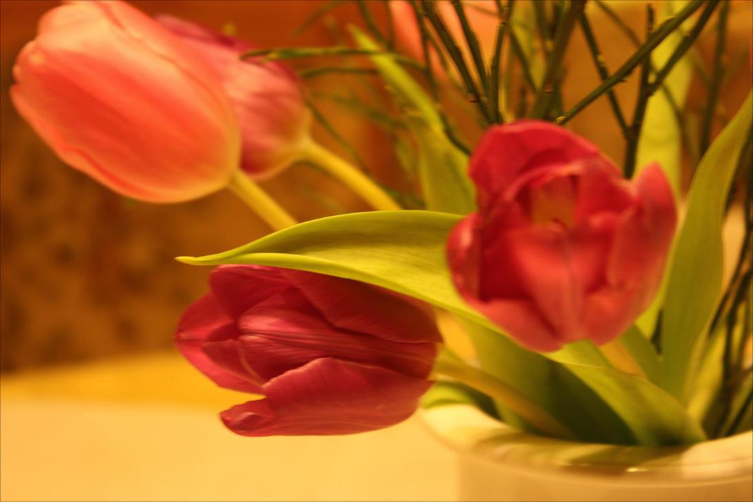 Tulips 2017 by GLO-HE
