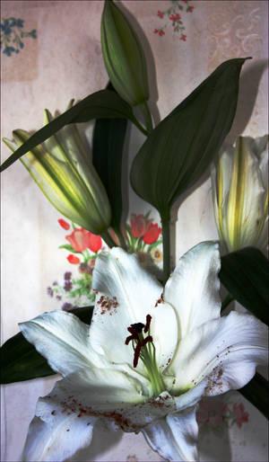 The lilies Lilium III by GLO-HE