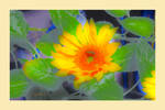 sunflower by GLO-HE