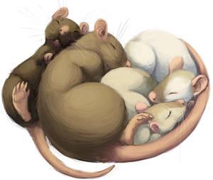 sleepy rats
