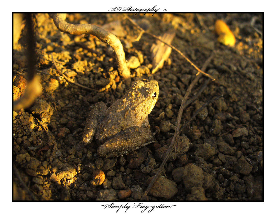 Simply Froggotten by AO-Photography