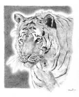 Tiger Tiger by meadow-rue
