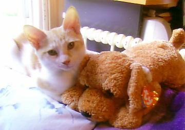 cute Kitty by snowcat