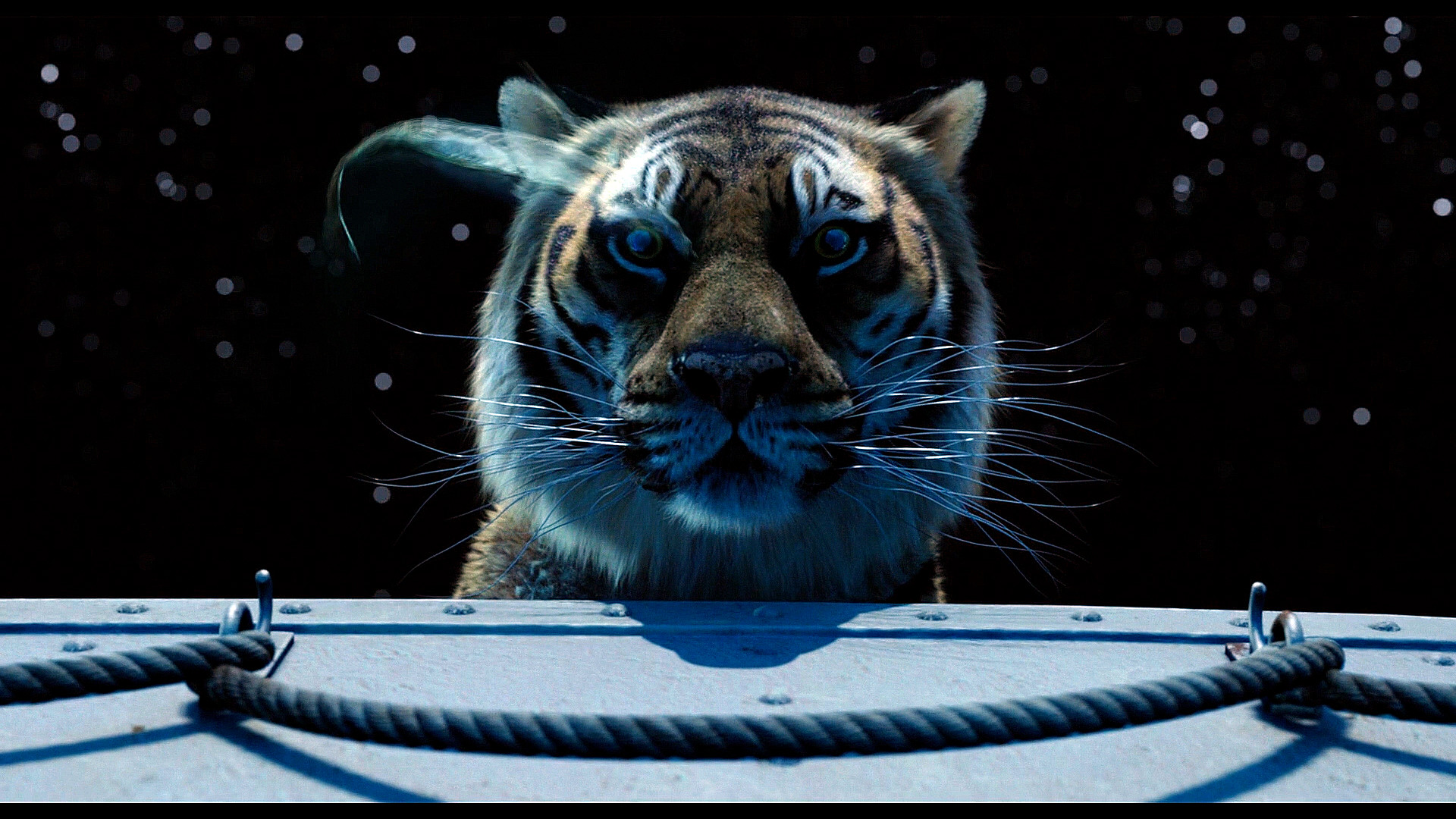 richard parker life of pi by marsson on deviantart