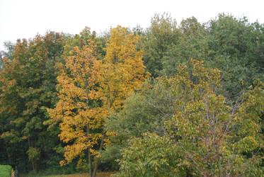 automne1 by trollseb