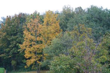 automne2 by trollseb